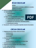 2076216 Ciclo Celular