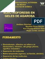 Electroforesis en Agarosa