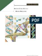 A¦ücidos Nucleicos