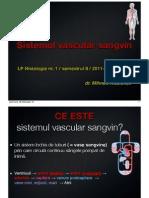 histologie lp vascular