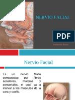 Nervio Facial 2