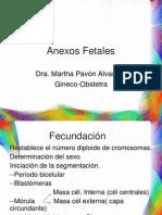 Anexos Fetales 2