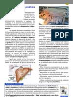 Liverfine porcinob