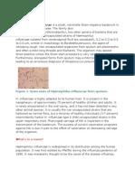 haemophillus influenzae
