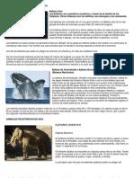 Animales en Extincion en Europa