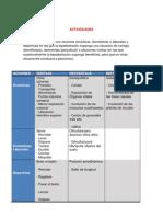 Trabajo anatomía pdf
