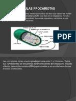 Células procariotas diapositivas