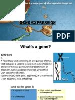 gene expression [Autosaved].pptx