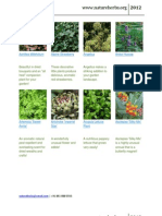 Herbs  www.natureherbs.org