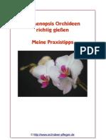 Phalaenopsis Orchideen richtig giessen ebook