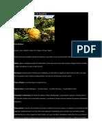 Conceptos Basicos de La Auyama