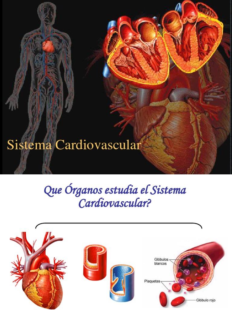15756071 1 Sistema Cardiovascular Nodal