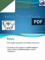 pelvisseaypelvisblanda-100524034454-phpapp01