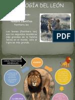 ETOLOGIA DEL LEON..2.pdf