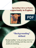 Backgrounding Calves (2)