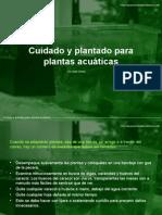 Cuidado Plantas Acuaticas