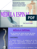 Medula e Spinal 2