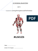 Muscles Physical Education