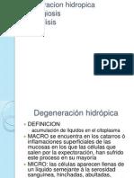 Degenracion hidropica