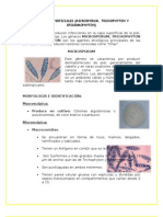 Informe de Microsporum