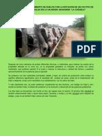 Informe Sobre Mejoramiento de Suelos Con Rotacion Con Cultivo de Frejol en Pastizales en La Hacienda Ganadera PDF