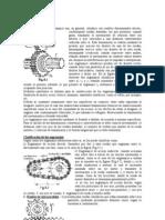 27235405-calculo-de-pinones.pdf