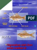 Fungsi Badan Ikan