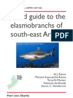 English sharks web.pdf