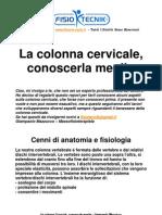 La Colonna Cervicale, Conoscerla Meglio - Riabilitazione - Atrosi - Fisioterapia