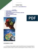Cerebro Triuno Monografia.com
