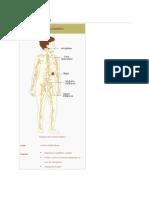 Sistema linfático.docx