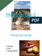 La Papa de Chile