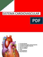 anatomofisiologiadosistemacardiovascular-aula05-090814190125-phpapp01