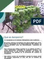 H2_Aeroponia