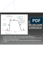 Potencial de Accion Miocardico
