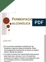 Ferment Alcohol