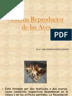 Sistema Reproductivo de Las Aves2