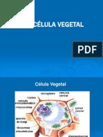 Celula Vegetal 1.ppt