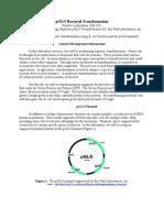 pGLOBacterialTransformationProtocol (2)
