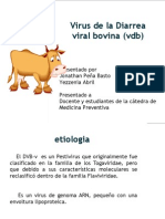 DVB Preventiva