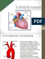circulacion coronaria mauri.ppt