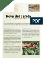 La Roya Del Cafeto