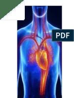 Tabajo de Anatomia Corzon