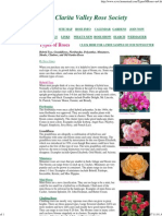 Roses. Types of Roses