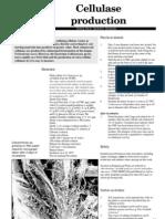 Cellulase Production Protocol