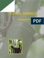 bamboo Propagation Manual