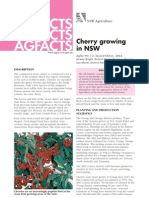 Cherry Growing in NSW
