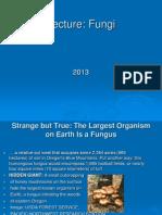 Fungi Lecture 2013
