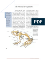 Skeletal and Muscular System of Frogs