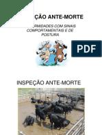 INSPEÇÃO ANTE-MORTE - enfermidades